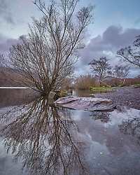 Rising lake waters surround a tree at the bank of Lyn Padarn in Llanberis, Wales