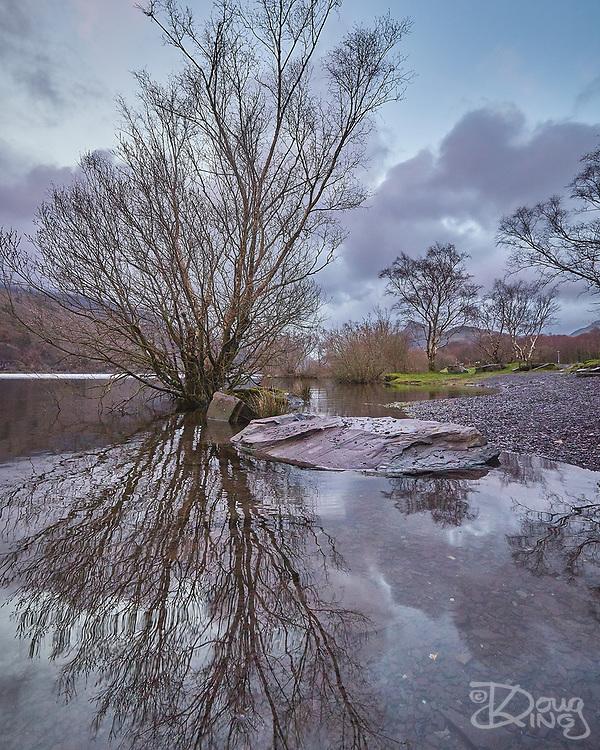 Rising lake waters surround a tree at the bank of Lyn Padarn in Llanberis, Wales