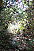 Hiking trail in the Galilee, Israel passing through a dense Mediterranean forest
