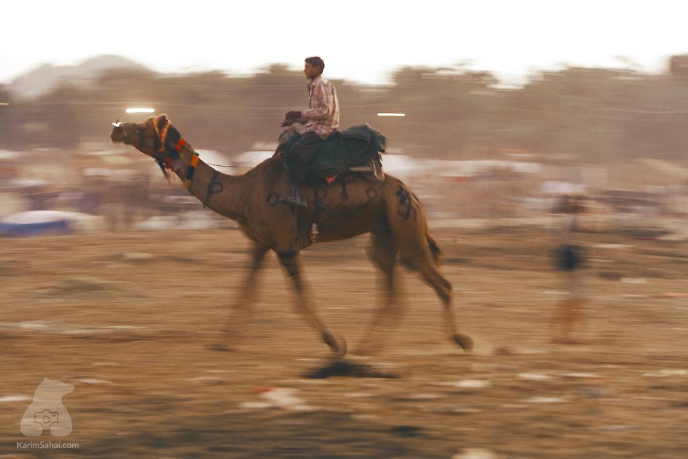 A man riding a camel, Pushkar, Rajasthan, India.