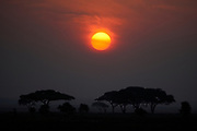 Sunset with acacia trees, Kenya, Africa