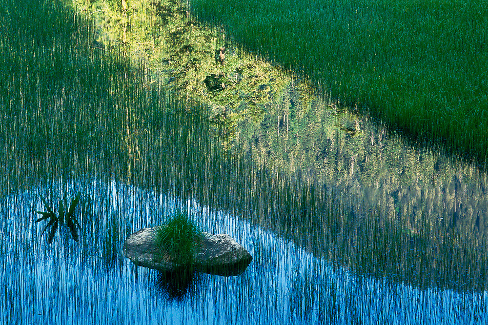 Pond, reeds and reflection, morning light, June, Ohanapecosh River watershed, Mount Rainier National Park, Washington, USA