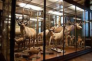 Specimens in the natural history museum in Vienna Austria, The Naturhistorisches Museum Wien
