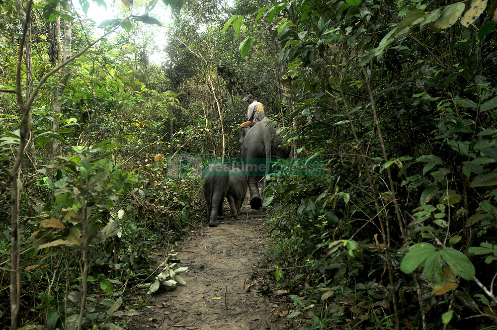 July 29, 2017 - Lampung, Java, Indonesia - Mahout Elephant Response Unit (ERU) escorted tame elephants to the river to be cleaned after a wild elephant patrol in Way Kambas National Park, Lampung, Sumatera, Indonesia on July 29,2017. The Elephant Response Unit (ERU) Their work not only helps ease human-elephant conflict but also helps protect Way Kambas National Park from its illegal activities and ensures the survival of the Sumatran elephant population today. With three monitoring posts in Bungur, Tegal Yoso, and Mraghayu ERU areas conduct regular monitoring patrols inside and along the National Park dormitory. Dasril Roszandi  (Credit Image: © Dasril Roszandi/NurPhoto via ZUMA Press)