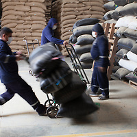 At the NORANDINO de Café warehouse in Piura, workers move batches of coffee for export. The warehouse handles hundreds of thousands of sacks of Fairtrade coffee and provides services to other exporters.