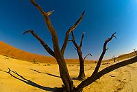 Dead Vlei (Clay Pan), Sossusvlei Sand Dunes (highest dunes in the world), Namib Desert, Namib-Naukluft National Park, Namibia