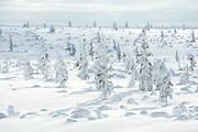 Winter Wonderland | Saariselkä, Finland
