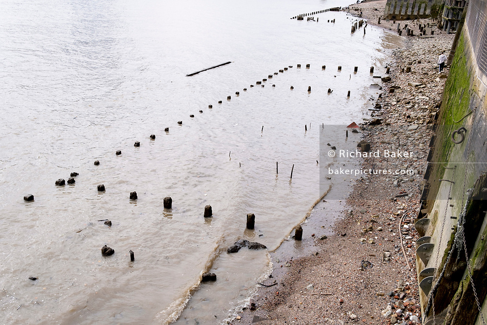 With the wooden piles of old warves and quays revealed in the low tidal waters of the Thames, a member of the public explores the river's foreshore near the Saxon and Elizabethan-era Queenhithe dock, on 13th September 2021, in London, England. Excavating the Thames foreshore is only allowed by licensed 'Mudlarkers' who scour the mud and shingle for historical artefacts dated from throughout London's history as a port and ancient settlement.