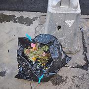 Trash Cam