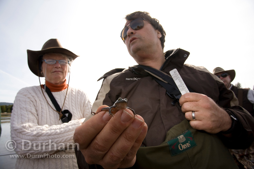 Washington Fish and Wildlife Senior Research Scientist Mark Hayes holdes a young oregon spotted frog (Rana Pretios) in the Conboy Lake National Wildlife Refuge during a survey as participants look on.