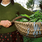 An elderly subsistence farmer carries a basket full of nettles for making soup and a sickle in the churchyard in Botiza, Maramures, Romania