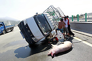 FUZHOU, CHINA - AUGUST 05: (CHINA OUT) <br /> <br /> A van carrying 12 pigs turns over on major Road<br /> <br /> People try to set a van upright on the third ring road on August 5, 2013 on Fuzhou, Fujian Province of China. A van carrying 12 pigs turned over on the third ring road on Monday. A pig died of heatstroke as the temperature reached 40 degrees Celsius.<br /> ©Exclusivepix