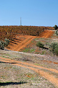 winding vineyard dirt road herdade do peso alentejo portugal