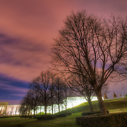 Row of trees on the grounds of the Nelson Atkins Museum of Art in Kansas City, Missouri. December 22, 2011.