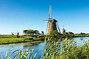 Group of authentic windmills at Kinderdijk UNESCO World Heritage Site, polder, ducks on dyke, Holland, The Netherlands
