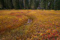 "A stream once flowed here now only a meandering spring displaying autumn color the Takh Takh Meadow Gifford Pinchot National Forest in Washington state's Cascade Mountain Range near Mount Adams. (""Takh Takh"" is a Taidnapam/Yakama word meaning ""small Prairie"")"