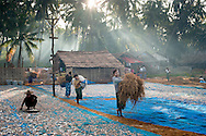 Myanmar, Ngapali. Morning in the village. Girls carry the hay.<br />  Every single morning all the fisherman from the little village at Ngapali Beach come back home with their night catch. At the beach all the women wait for them and afterwards work with drying and selling fish and other creatures from the sea begins.