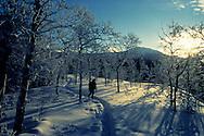 Winter scene, Yukon