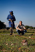 Heroic Rats Sniff Out Landmines In Africa, Could Save 1,000s Of People Worldwide<br /> <br /> Bomb-sniffing rats could save thousands around the world from death and dismemberment every year. APOPO, a Belgian NGO that has been training giant African pouched rats to detect landmines, thinks it can make this dream a reality. In operation since 1997, their rats can effectively search 200 square meters in 20 minutes, versus the 25 operational hours it would take humans with mine detectors. There was a global average of 9 mine-related casualties per day in 2013.<br /> No HeroRats have died in the line of duty. An average mine requires something weighing 5kg (11lb) or more to detonate, and the heaviest operational male rats do not exceed 1.5kg (3.3lb). Furthermore, sunscreen is applied to the rats' ears to prevent skin-cancer. Once a rat is no longer keen to work, or is too old, it is retired and permitted to live out the rest of its natural life.<br /> ©apopo/Exclusivepix Media