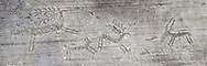 Petroglyph, rock carving, of deer being chased by a dog in a hunting scene Carved by the ancient Camunni people in the iron age between 1000-1600 BC. Rock no 24,  Foppi di Nadro, Riserva Naturale Incisioni Rupestri di Ceto, Cimbergo e Paspardo, Capo di Ponti, Valcamonica (Val Camonica), Lombardy plain, Italy .<br /> <br /> Visit our PREHISTORY PHOTO COLLECTIONS for more   photos  to download or buy as prints https://funkystock.photoshelter.com/gallery-collection/Prehistoric-Neolithic-Sites-Art-Artefacts-Pictures-Photos/C0000tfxw63zrUT4<br /> If you prefer to buy from our ALAMY PHOTO LIBRARY  Collection visit : https://www.alamy.com/portfolio/paul-williams-funkystock/valcamonica-rock-art.html