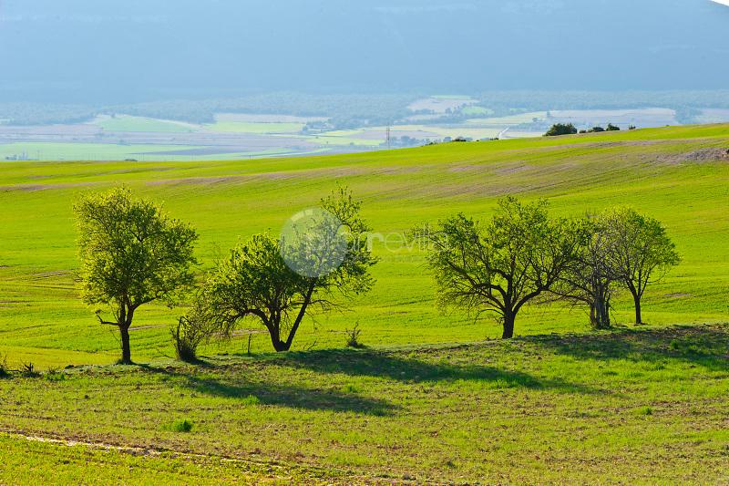 Campo verde con almendros. Almansa. Albacete ©Antonio Real Hurtado / PILAR REVILLA