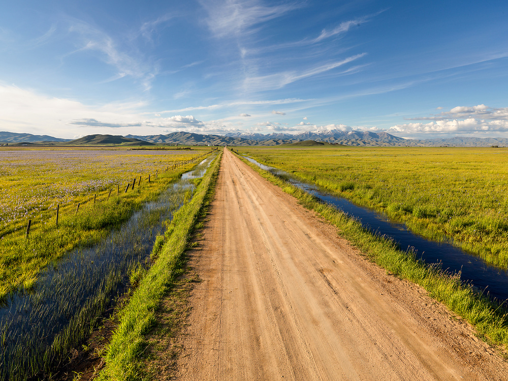 Editions of 8<br /> Rural dirt road on the Camas Prairie in Southwest Idaho travels through the Centennial Marsh wetlands with blooming Camas Flowers and flooded pastures near Hill City