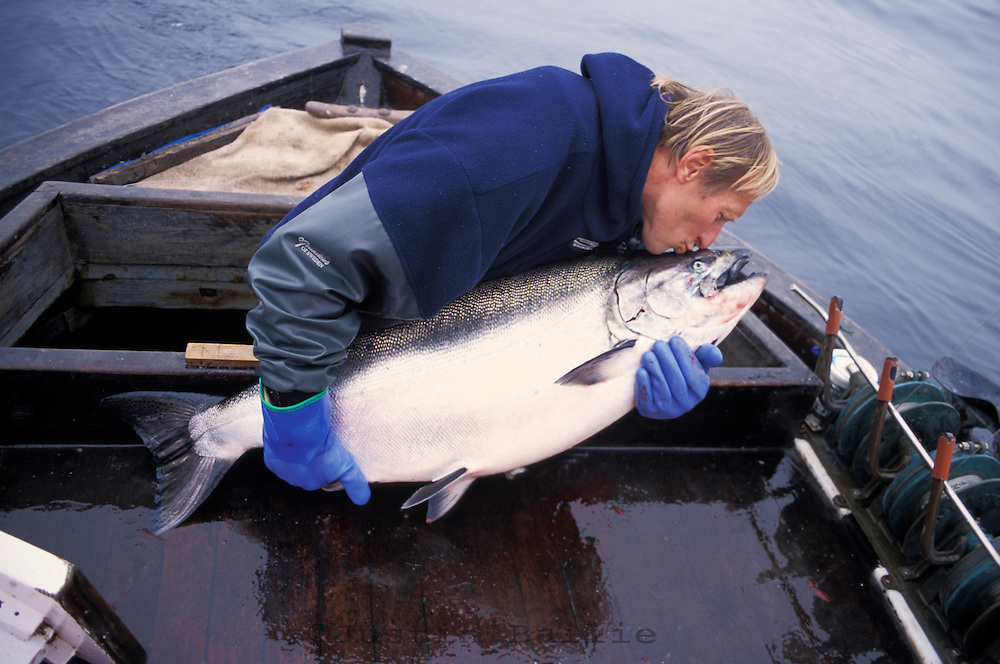 Al Ritter, a commercial salmon fisherman, kisses a large Chinook Salmon.