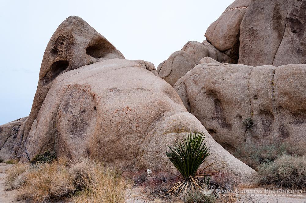 United States, California, Joshua Tree National Park. Jumbo Rocks.
