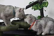 """SHANGHAI, CHINA -  (CHINA OUT) <br /> <br /> Cat Bar In Shanghai china<br /> A general view of a cat bar is seen in Shanghai, China. There are many cats in the bar to """"serve"""" customers, most of customers are cat lovers. Cat lovers also can farm out their cats with the bar. Shanghai has at least three cat bars like this. <br /> ©ChinaFoto/Exclusivepix"""
