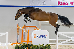 147, Sauvignon Di Fer<br /> KWPN Hengstenkeuring 2021<br /> © Hippo Foto - Dirk Caremans<br />  02/02/2021