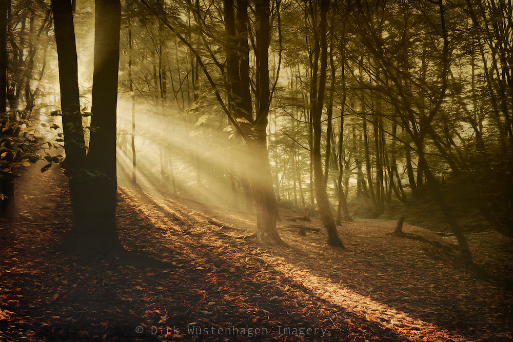 Morning sun in a forest in fall - texturized photograph<br /> Licenses:http://www.trevillion.com/search/preview/trevillion/0_00217936.html