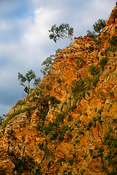 Small trees cling to the cliffs in Cyclone Creek, Talbot Bay