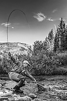 A fly fisherman stretches down to land a trout on a Utah stream.