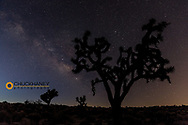 Joshua Trees silhouetted by starry skies in Joshua Tree National Park, California, USA
