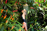 Private home in Parati Brazil. Woman showering surrounded by jungle and flowers in an outdoor shower.