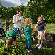 Sandy Greene watches first grade students Elyn Parham, right, and Lillian Willmon eat strawberries from a plant the class planted the year before in the garden at Silverdale Baptist Academy in Chattanooga, Tennessee. Nathan Lambrecht/Journal Communications