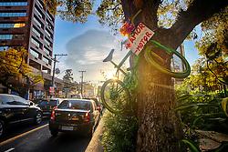Bicicleta fixada em árvore da capital gaúcha. Mais amor Menos motor é uma campanha de conscientização do trânsito em Porto Alegre. FOTO: Jefferson Bernardes/Preview.com