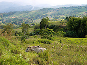 Agricultural landscape of Cotabato province, Mindanao Island, The Philippines. In the Philippines climate change is contributing to an increase in the frequency and intensity of typhoons as well as a general rise in temperatures and rain leading to an increase in droughts, flash floods and landslides. This is having a huge impact on smallholder farmers who depend on one cash crop leaving them vulnerable to any changes in weather patterns. If their crops fail they are left with no other source of income for that year. In central Mindanao Oxfam is working with local partners and governments to increase awareness of climate change in poor communities and reduce the risks it creates to vulnerable farmers by supporting them in crop diversification.