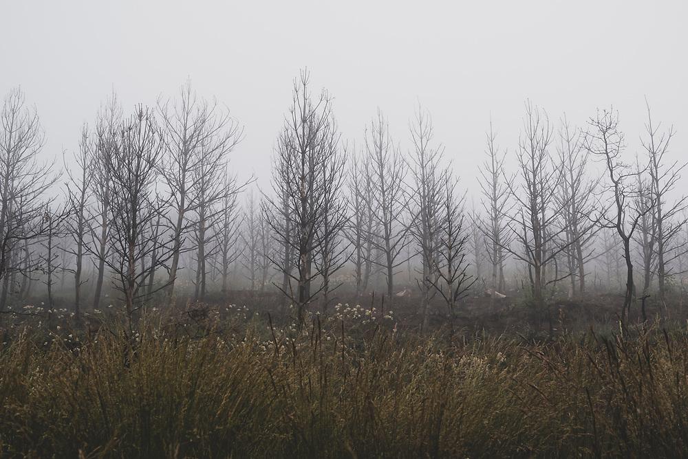 Early morning fog on the Camino de Santiago outside Rabanal del Camino, Spain. (July 1, 2018)