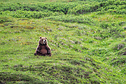 Bears can sometimes be so funny, although I am sure they don't intend to be.