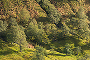 Telephoto view of some trees in Strathconon, during the early evening.