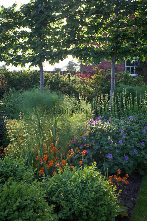 Sisyrinchium striatum, Geum 'Prinses Juliana', geranium and fennel, The Rusty Garden, Manor Farm, Cheshire