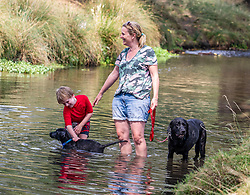 © Licensed to London News Pictures. 08/08/2020. London, UK. A family and their dog cool off in the Beverley Brook in Richmond Park South West London  as temperatures reach to 35c for the second day in a row. Thousands of sun seekers have flocked to parks, rivers and the south coast as temperatures soar with beaches and roads becoming jammed with holidaymakers. The heat is set to continue for the rest of the week with temperatures expected reach over 30C. Photo credit: Alex Lentati/LNP <br /> <br /> *Permission Granted*