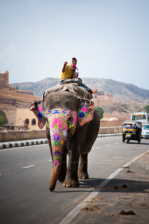 A decorated elephant walking on the road near Amber fort, Jaipur