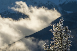North America, United States, Washington, Crystal Mountain, view of snow-covered trees through cabin window  PR