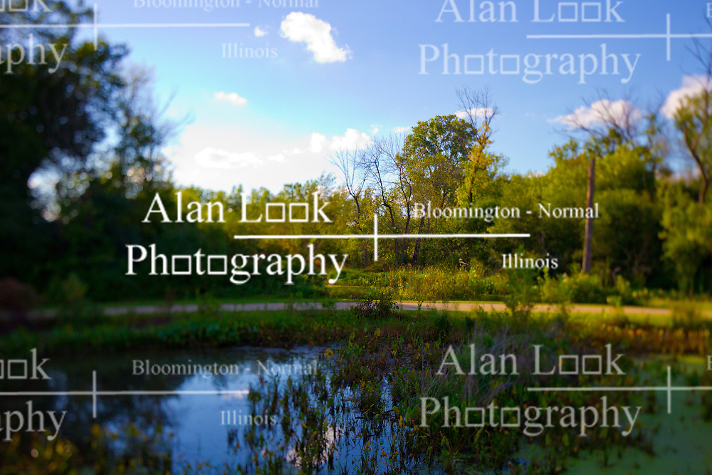 30 August 2014:   Natural setting of a small pond or lake surrounded by timber with a background of a blue sky with puffy white clouds.  This image was shot with a perspective corrective lens to control the focus and blur to create a special effect<br /> <br /> This image was produced in part utilizing High Dynamic Range (HDR) or panoramic stitching or other computer software manipulation processes. It should not be used editorially without being listed as an illustration or with a disclaimer. It may or may not be an accurate representation of the scene as originally photographed and the finished image is the creation of the photographer.
