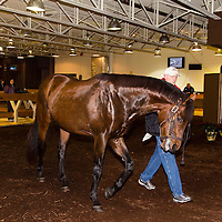 CTHS - Winter Mixed Horse Sale 2014