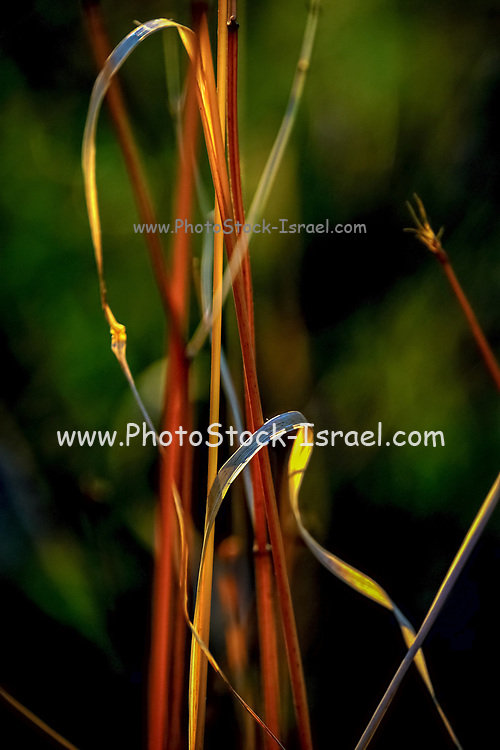 Autumn colours brown leaf