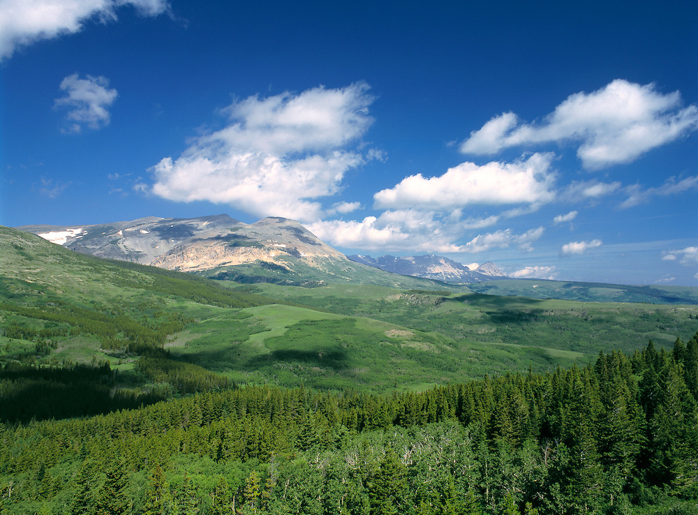 Dense forests reach into the foothills of the Rocky Mountains in Glacier National Park, Montana.