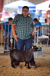 McLean County Fair - goat competition